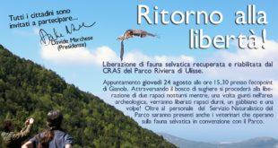 Liberazione di fauna selvatica nel comune di Formia, Parco di Gianola e Monte di Scauri