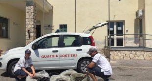 Formia, la Guardia Costiera sequestra 160 kg di cozze. Sanzioni per oltre 32.000 euro