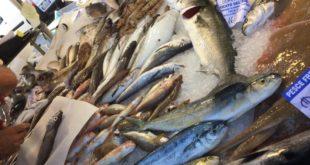 Blocco della pesca nel Golfo