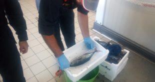 Gaeta, sequestrato tonno rosso sottomisura