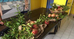 Festa dell'albero: gli alunni piantano un melograno nel cortile della scuola